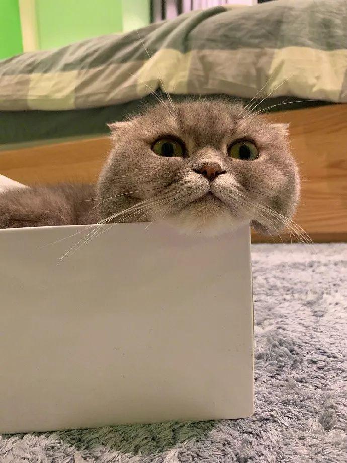 让猫安安静静睡在你旁边的小妙招,太管用了!