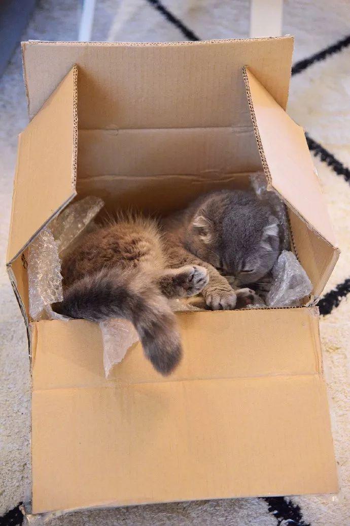 丢纸箱的时候千万注意,别不小心把猫丢了!!
