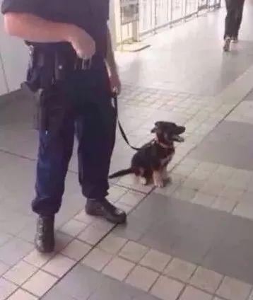 这一届的小警犬真难带,还没开始训练,就被围攻了....