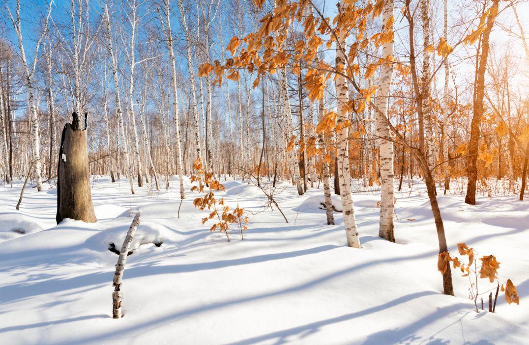 活动 | 12月22~28日,看冬季那达慕,从呼伦贝尔一路向北,7天6晚特价2380元 !